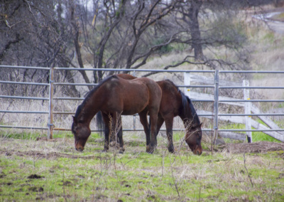Sol Sanctuary Equine Therapy