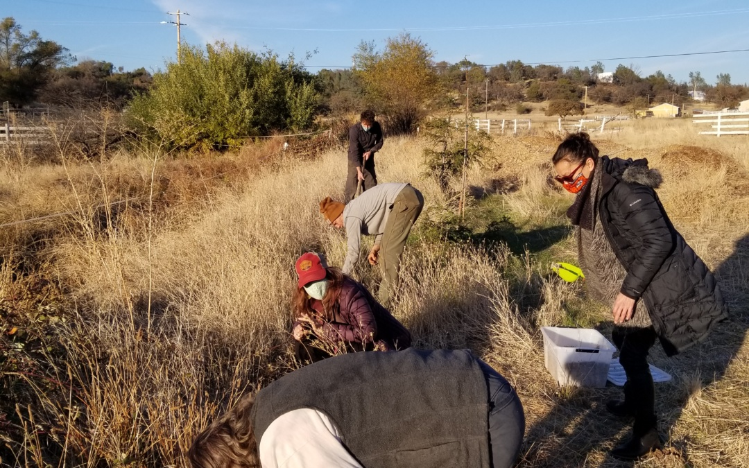 Black Friday Seed Planting Action Day Event
