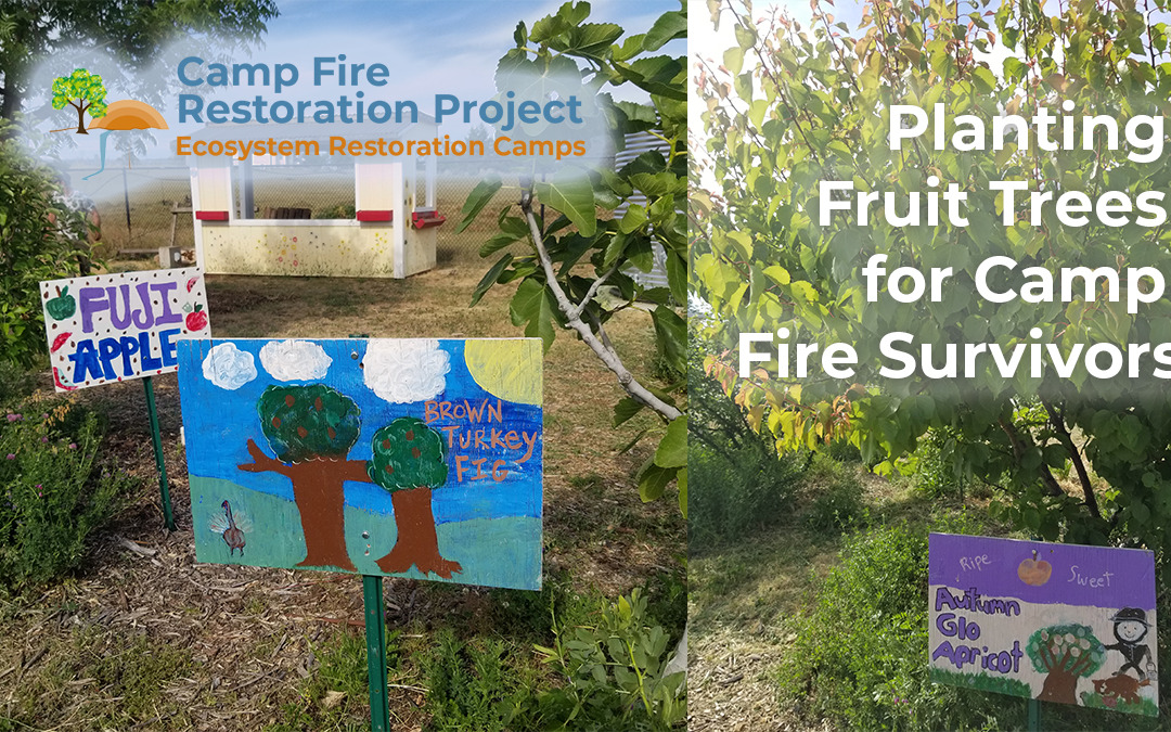 Planting Fruit Trees in the Burn Scar